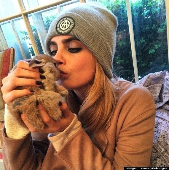 Cara Delevingne Gets VIP Treatment... For Her Pet Rabbit Cecil At V