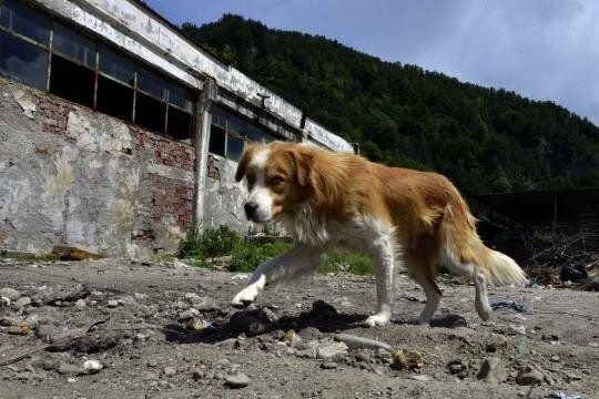 Romanian Stray Dogs - Court of Appeal Suspends Execution Methodology of