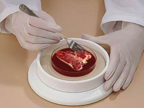 Designing the Recipe for the New Meat: Tissue Engineered