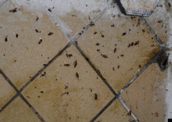 Cockroach Found In Curry: Council Inspection Reveals Restaurant Of Horror