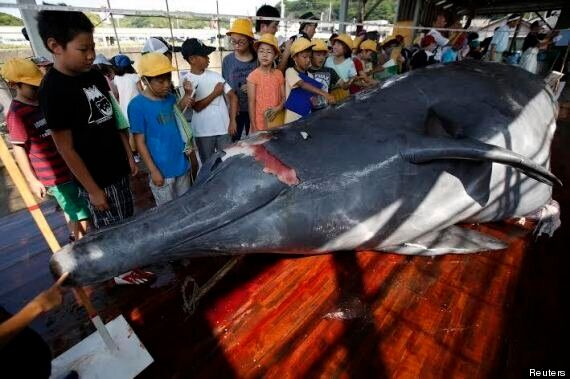 Sea Shepherd Slam 'Desperate' Japanese Whalers As Hunting Season