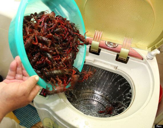 Washing Machine For Vegetables  Either The Laziest Or The Most Genius Idea