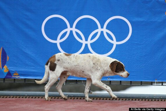 Russia Winter Olympics: Billionaire Battles To Save The Stray Dogs Of