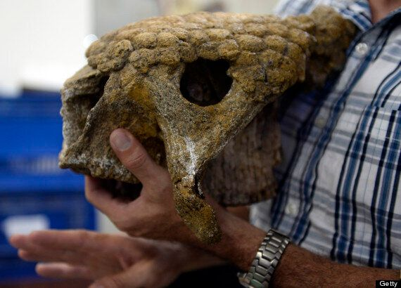 Giant Armadillo Among Prehistoric Fossil Find In