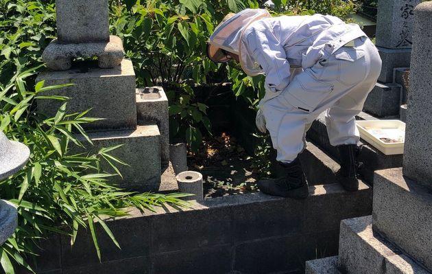 墓に巣食ったミツバチの大移動作戦。きっかけは住職の投稿「SNSが知識をつなげてくれる」