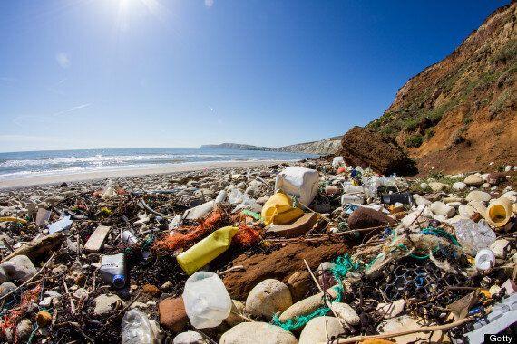 Paul Rose, Marine Expert, Says Ocean Litter Is Being Ingested By