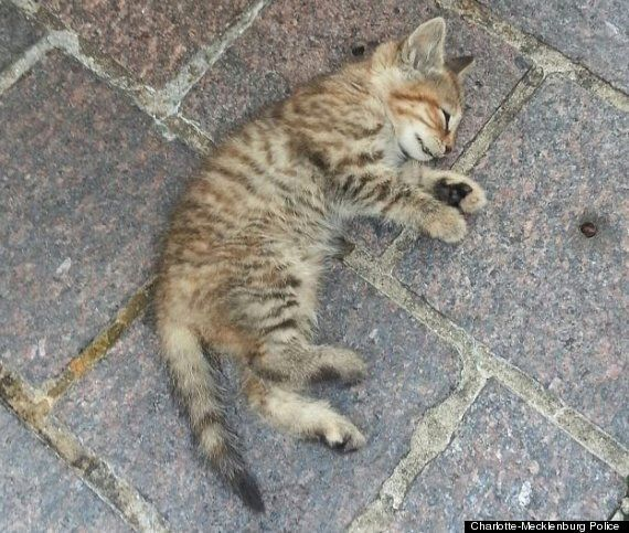 Kitten Dies After Being Thrown At Animal Rights Activists Protesting Against Slaughter Of
