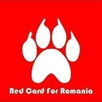 The Romanian Dog Massacre