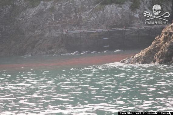 Sea Turns Red With Blood As Whales Are Butchered To Death In Japan