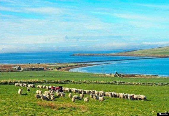 For Sale: Private Orkney Island & Coastal Farm For £600,000 – The Same As A London Flat