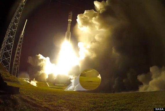 Armadillo Photobombs Space Rocket Launch Days After Frogstronaut