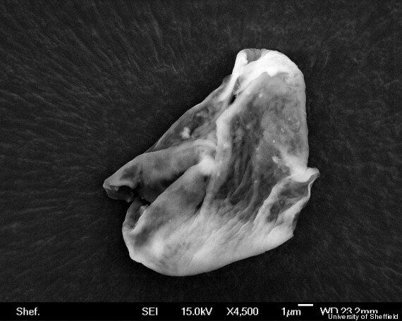 Alien Life 'Found Floating Above The Earth' Claims Sheffield