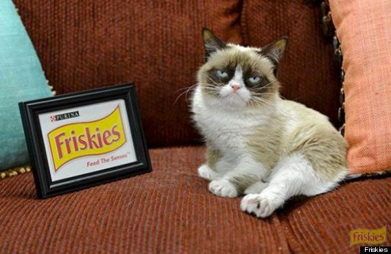 Grumpy Cat Signs Endorsement Deal With Friskies Pet