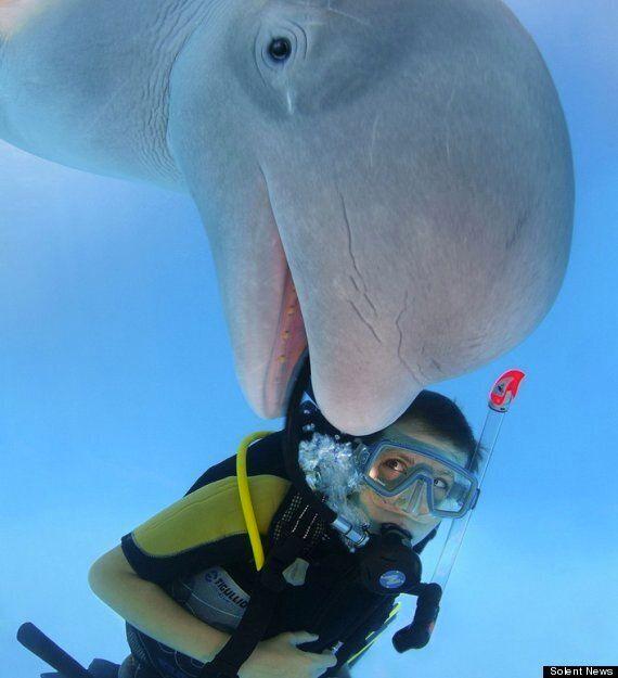 Beluga Whale Photobomb In Ukraine Is Pretty