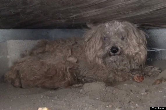 Dog Waits For A Year Under Shed After Owner Dies In Heartbreaking