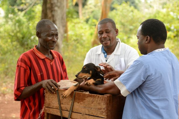 Preventing Rabies: It's a Public Health Issue for Animals and