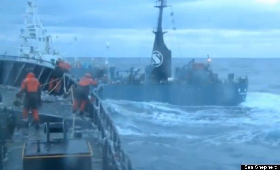 Sea Shepherd 'Attacked By Japanese Whalers'