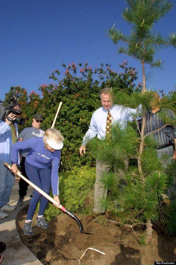 Late Beatle George Harrison's Memorial Tree Brought Down By Actual Beetles In Los