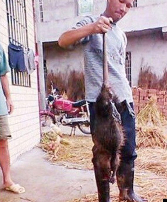 'One Metre Rat Killed By Chinese Farmers': 5kg Beast Cooked & Eaten, Reports Claim