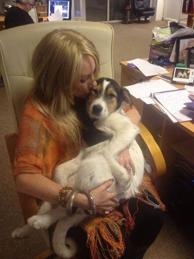 Romanian Dogs Need Urgent