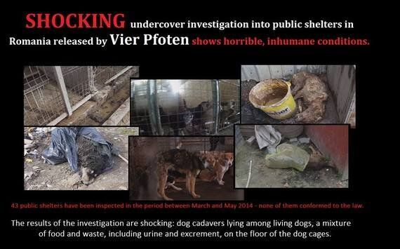 Horror in Romanian Dog Shelters -