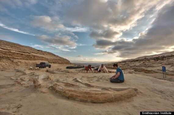 Mass Whale Graveyard Mystery Solved As Atacama Desert Gives Up Archeological Secrets