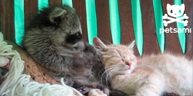 8 Unlikely (And Adorable) Animal
