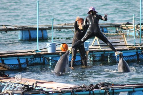 Taiji Claims They Can Have Their Dolphins and Eat Them