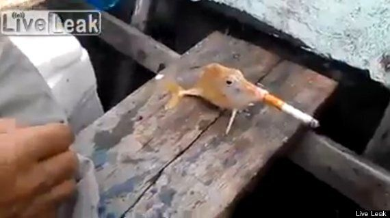 Smoking Fish Video Causes Outrage At Such Blatant Animal