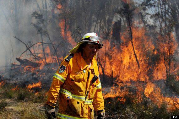 Australia Bushfires: Koala Fears As Fires Rage In New South Wales
