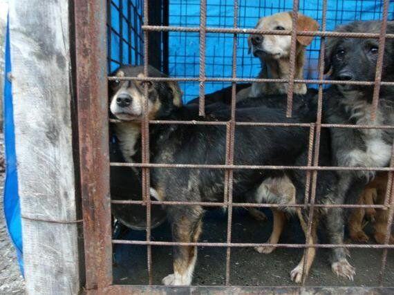 Canine Cruelty in