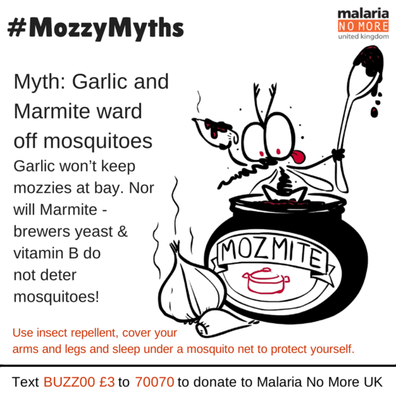 Mozzy Myth Busting on World Mosquito