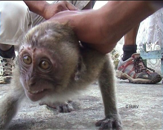When Will Mauritius Stop the Cruel Exploitation of Its Native Population of Wild