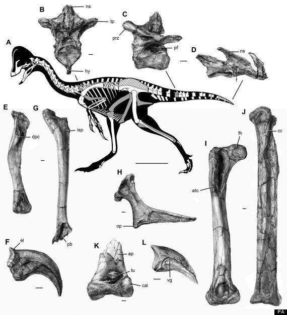 'Chicken From Hell' Dinosaur Was 10-Feet Tall And 'Absurd' Say