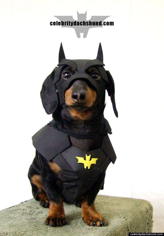 Halloween 2013: Crusoe The Celebrity Dachshund Shows Everyone How It's Really Done