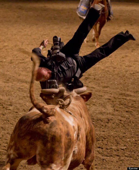 Rodeo Photographer Sent Flying By Rampaging Bull In Toronto