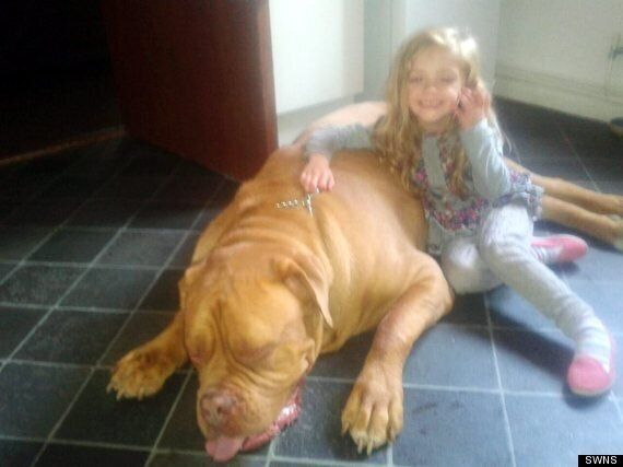 Girl Mauled To Death By Dog In Leicestershire Named As Lexi