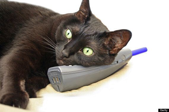 Cat Called Bruce Lee Dials 999 And Hangs Up, Police Rush To Scene In