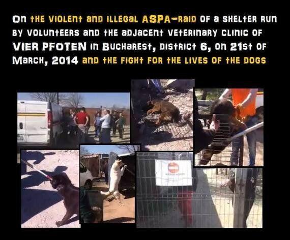Brutal Massacre at Four Paws Dog Shelter,