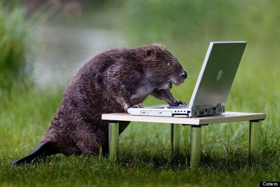 Beaver Gets Behind The Camera