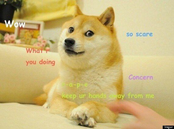 Doge The Shiba Inu Dog Meme Owns The Internet (PICTURES,