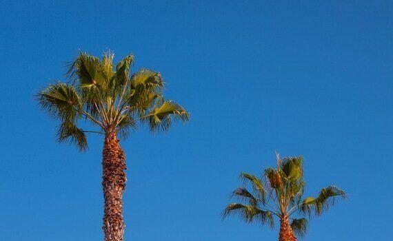Abbot Kinney: LA's Coolest