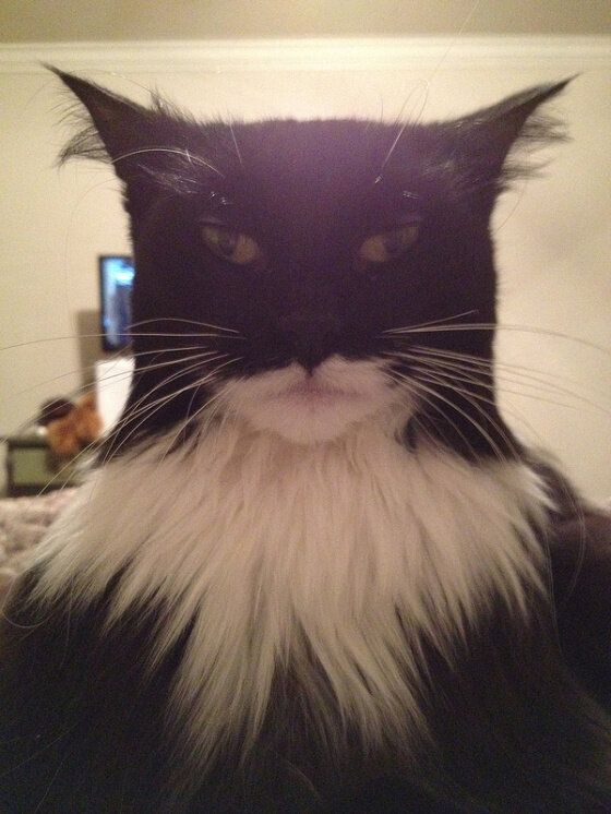 How To Look Like Batman, Using Your Cat