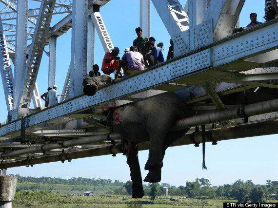 Baby Elephants Among Those Killed As Train Slams Into Herd (PICTURES