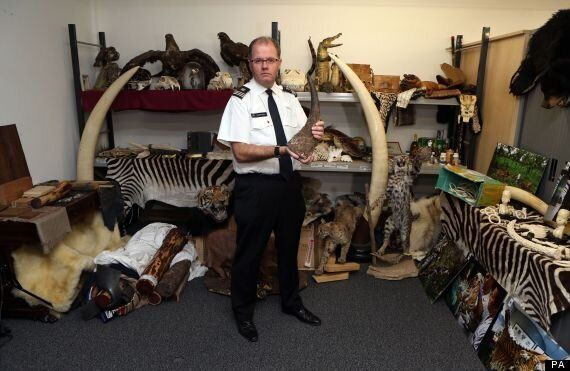 Illegal Animal Items Smuggled Into UK In Record Numbers