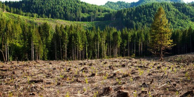 Deforestation In Amazon Up By 28% This