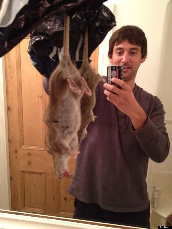 Monster Rat In London Survives Trap, Is Beaten To Death With Firewood