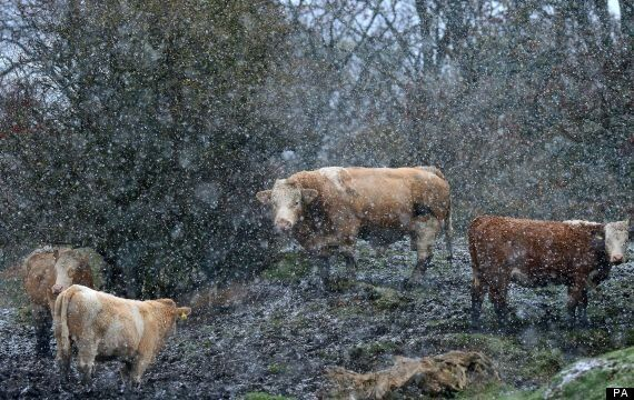 UK Weather: Snow And Cold Sweeps Country