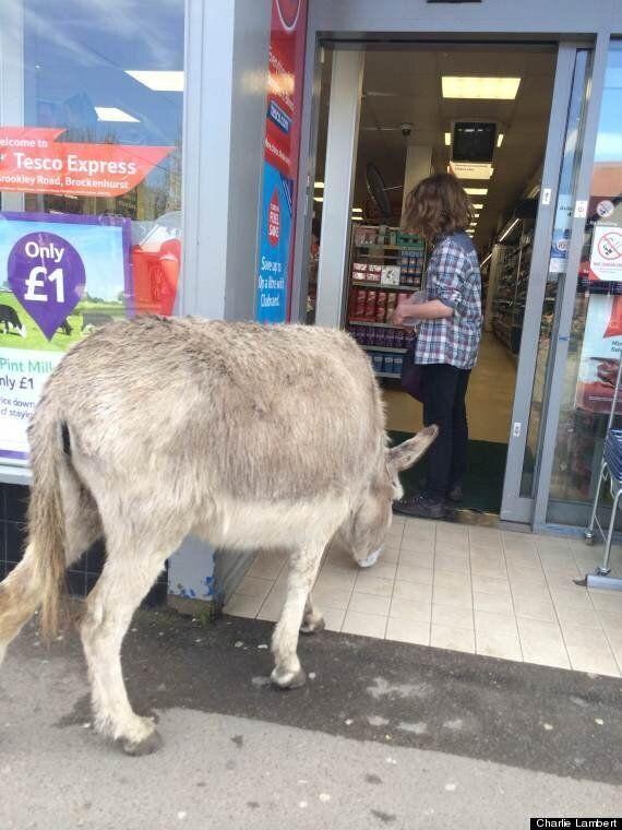 Donkey Walks Into Tesco In Brockenhurst, Here's Why You Should Be