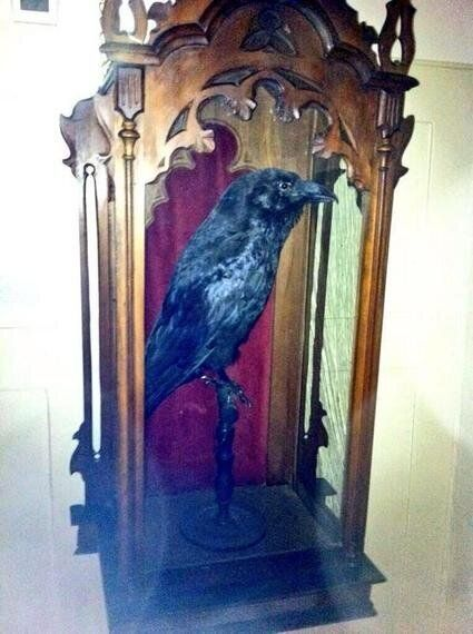 Black Jack, Dickens' Raven at the Tower of